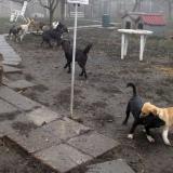 kutya-orokbefogadas-hajduszoboszlo-2017-november-67