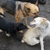 kutya-orokbefogadas-hajduszoboszlo-2017-november-73