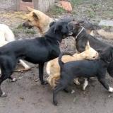 kutya-orokbefogadas-hajduszoboszlo-2017-november-74