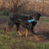 kutya-orokbefogadas-hajduszoboszlo-2017-november-93