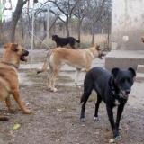 menhely-kutya-orokbefogadas-hajduszoszlo-2018-november-12