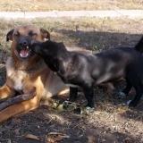 menhely-kutya-orokbefogadas-hajduszoszlo-2018-november-15