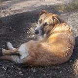 menhely-kutya-orokbefogadas-hajduszoszlo-2018-november-18