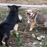 menhely-kutya-orokbefogadas-hajduszoszlo-2018-november-1