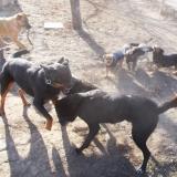 menhely-kutya-orokbefogadas-hajduszoszlo-2018-november-22