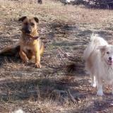 menhely-kutya-orokbefogadas-hajduszoszlo-2018-november-25