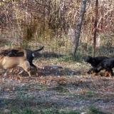 menhely-kutya-orokbefogadas-hajduszoszlo-2018-november-27