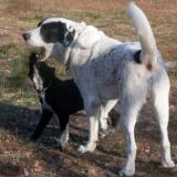 menhely-kutya-orokbefogadas-hajduszoszlo-2018-november-29