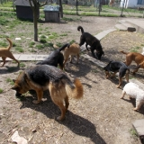 kutya-menhely-hajduszoboszlo-kutya-orokbefogadas-2018-marcius-16