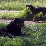kutya-menhely-hajduszoboszlo-kutya-orokbefogadas-2018-marcius-23