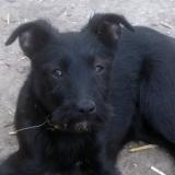 kutya-menhely-hajduszoboszlo-kutya-orokbefogadas-2018-marcius-36