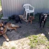kutya-menhely-hajduszoboszlo-kutya-orokbefogadas-2018-marcius-6