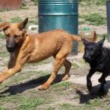 kutya-menhely-hajduszoboszlo-kutya-orokbefogadas-2018-marcius-10