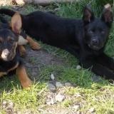kutya-menhely-hajduszoboszlo-kutya-orokbefogadas-2018-marcius-13