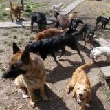 kutya-menhely-hajduszoboszlo-kutya-orokbefogadas-2018-marcius-15