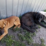 kutya-menhely-hajduszoboszlo-kutya-orokbefogadas-2018-marcius-21