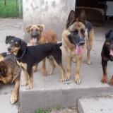 kutya-menhely-hajduszoboszlo-kutya-orokbefogadas-2018-marcius-38