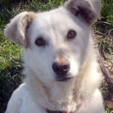 kutya-menhely-hajduszoboszlo-kutya-orokbefogadas-2018-marcius-49