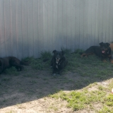 kutya-menhely-hajduszoboszlo-kutya-orokbefogadas-2018-marcius-8