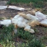 menhely-kutya-orokbefogadas-hajduszoszlo-2018-augusztus-5