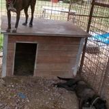 menhely-kutya-orokbefogadas-hajduszoszlo-2018-augusztus-29