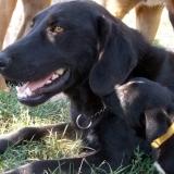 kutya-menhely-hajduszoboszlo-kutya-orokbefogadas-2018-julius-3