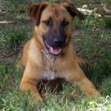 kutya-menhely-hajduszoboszlo-kutya-orokbefogadas-2018-junius-10