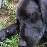 kutya-menhely-hajduszoboszlo-kutya-orokbefogadas-2018-junius-11