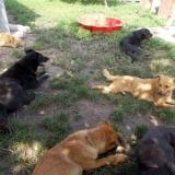 kutya-menhely-hajduszoboszlo-kutya-orokbefogadas-2018-junius-28