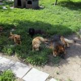 kutya-menhely-hajduszoboszlo-kutya-orokbefogadas-2018-junius-27