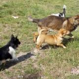 kutya-menhely-hajduszoboszlo-kutya-orokbefogadas-2018-majus-7