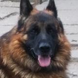 menhely-kutya-orokbefogadas-hajduszoszlo-2018-október-8