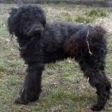 kutya-orokbefogadas-hajduszoszlo-2018-februar-3