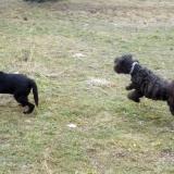 kutya-orokbefogadas-hajduszoszlo-2018-februar-4