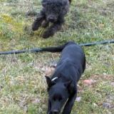 kutya-orokbefogadas-hajduszoszlo-2018-februar-5