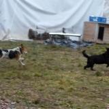 kutya-orokbefogadas-hajduszoszlo-2018-februar-9