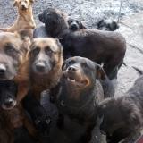 kutya-orokbefogadas-hajduszoszlo-2018-februar-16