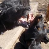 kutya-orokbefogadas-hajduszoszlo-2018-februar-19