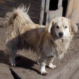 kutya-orokbefogadas-hajduszoszlo-2018-februar-20