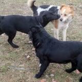 kutya-orokbefogadas-hajduszoszlo-2018-februar-8