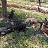 _menhely-kutya-orokbefogadas-hajduszoszlo-2018szeptember-25