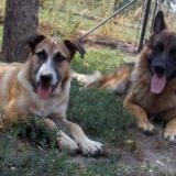 _menhely-kutya-orokbefogadas-hajduszoszlo-2018szeptember-8