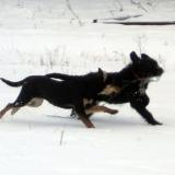 kutya-menhely-hajdú-bihar-hajdúszoboszló-kutyaorokbefogadas-2019.januar-13