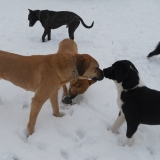 kutya-menhely-hajdú-bihar-hajdúszoboszló-kutyaorokbefogadas-2019.januar-14