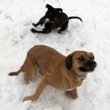 kutya-menhely-hajdú-bihar-hajdúszoboszló-kutyaorokbefogadas-2019.januar-16