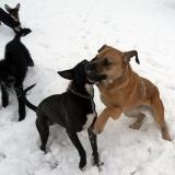 kutya-menhely-hajdú-bihar-hajdúszoboszló-kutyaorokbefogadas-2019.januar-17