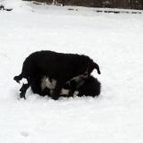 kutya-menhely-hajdú-bihar-hajdúszoboszló-kutyaorokbefogadas-2019.januar-2