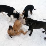 kutya-menhely-hajdú-bihar-hajdúszoboszló-kutyaorokbefogadas-2019.januar-20