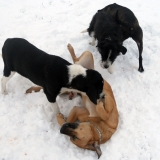 kutya-menhely-hajdú-bihar-hajdúszoboszló-kutyaorokbefogadas-2019.januar-22