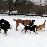 kutya-menhely-hajdú-bihar-hajdúszoboszló-kutyaorokbefogadas-2019.januar-24